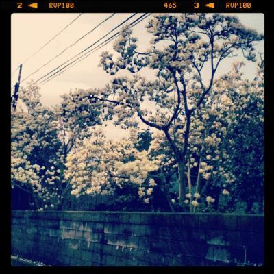 写真_convert_20120303195400