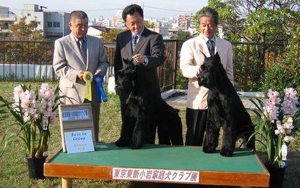 ハーツ.ニューチャンピオン完成2008.11.02