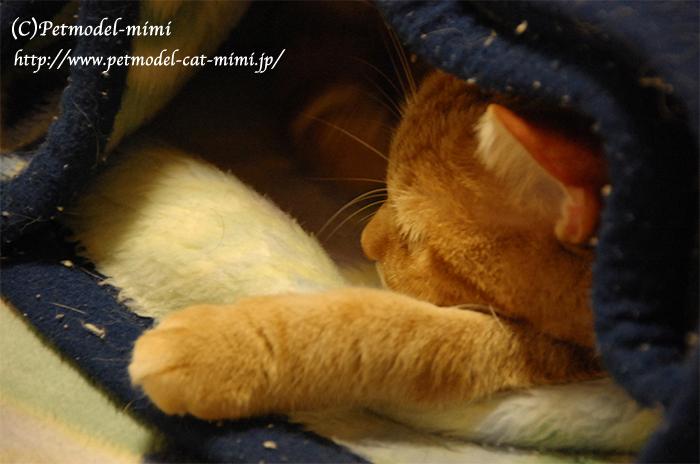 毛布とmimi