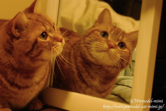 鏡とみーちゃん
