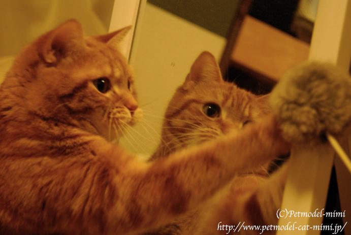 鏡とみーちゃんとポンポン