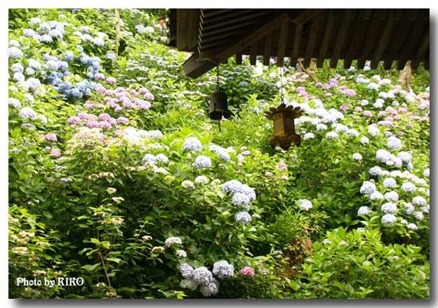 鎌倉(長谷寺)