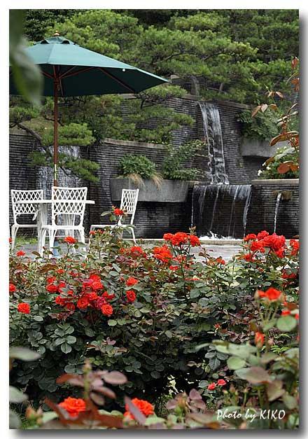 須磨離宮公園の薔薇園