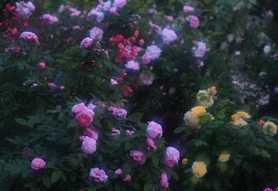 garden719