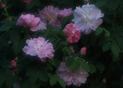 garden720