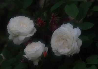 garden723