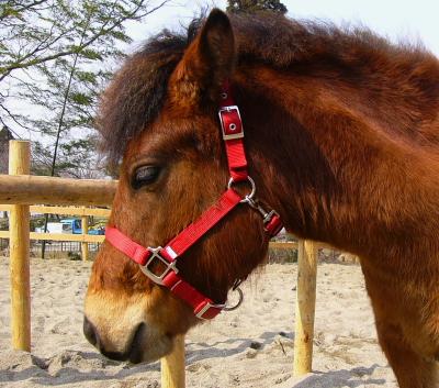 horse610