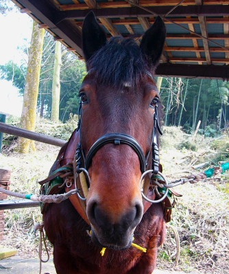 horse611