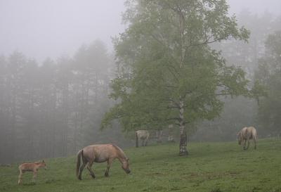 horse804