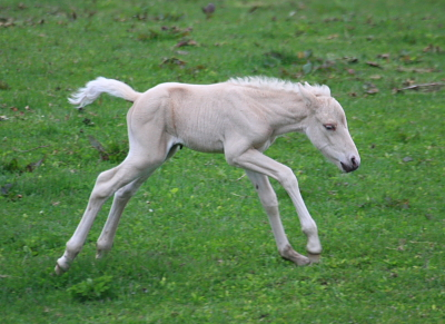 horse807