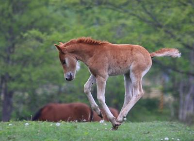 horse808
