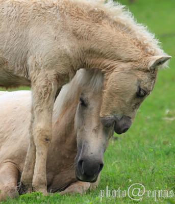 horse810