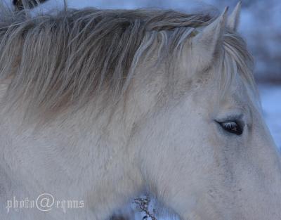 horse812