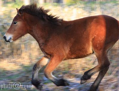 horse815