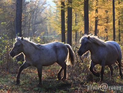 horse816