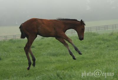 horse818