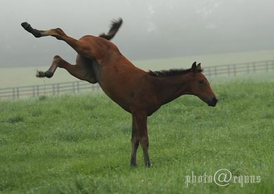 horse819