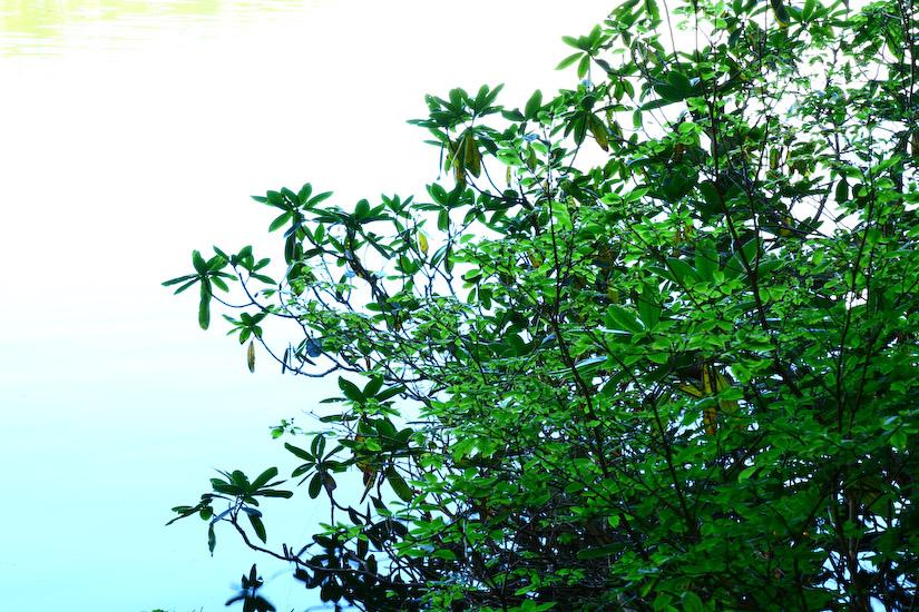 SHIRAKOMA(白駒池)