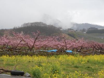桃と菜の花