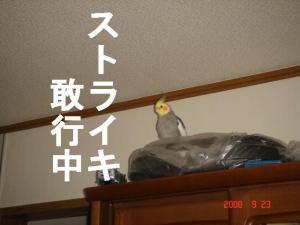 DSC07946.jpg