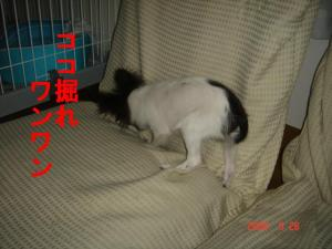 DSC07971.jpg