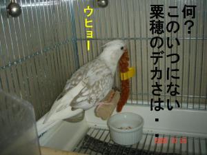 DSC08268.jpg
