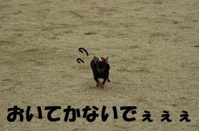 s-DSC_0005-1.jpg