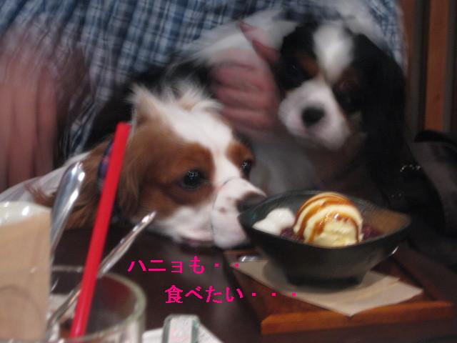 ハニョ食べたい