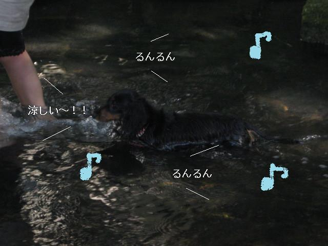 ぷりん川遊び
