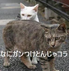コピー (5) ~ 猫のいろいろ