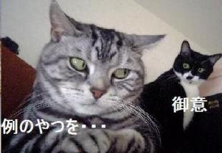 コピー (6) ~ 猫のいろいろ