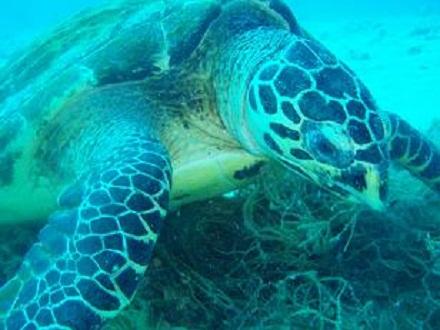 タオ島 ダイビングブログ タイマイ