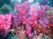 タオ島 魚 ウミトサカ