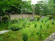 天得院のお庭