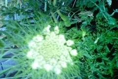 [何の花?2]