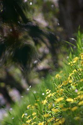 spring05.jpg