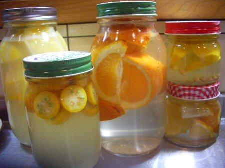 柑橘類の酵母たち450