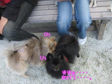 ふーちゃん&モコ2