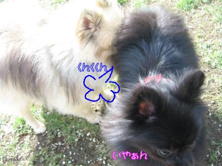 ふーちゃん&モコ4
