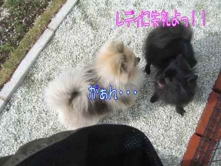 ふーちゃん&モコ3