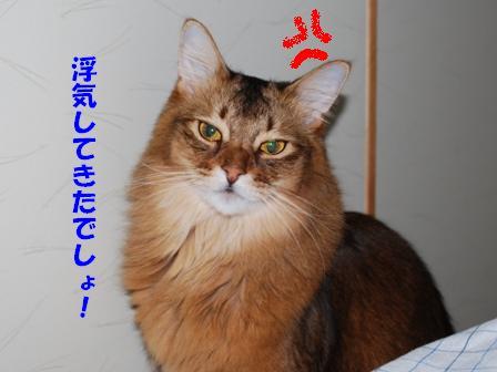 DSC_0028_20090113121959.jpg