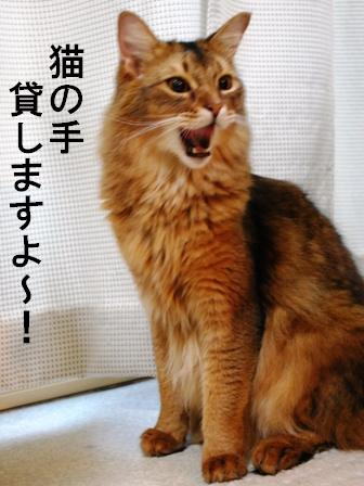 DSC_0030_20081125105002.jpg