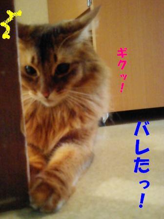 PAP_2010_20081016122355.jpg