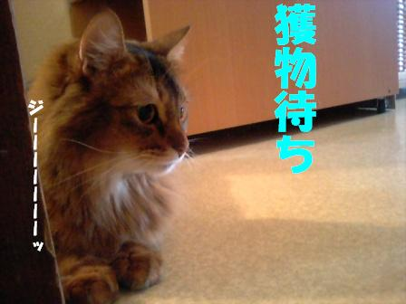 PAP_2011.jpg