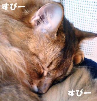 PAP_2204_20081031095235.jpg