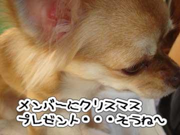 DSC07136.jpg