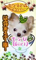 k_member_chippi.png