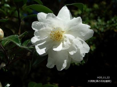ねこ1122と紅葉(大洞院・お国神社) 041