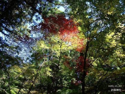 ねこ1122と紅葉(大洞院・お国神社) 065