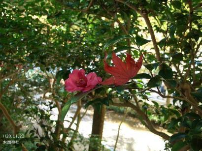 ねこ1122と紅葉(大洞院・お国神社) 107